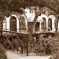 Savannah Arches In Sepia by Carol Groenen