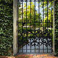 Savannah Gate II by Sharon Foster