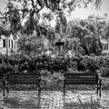 Savannah Park Bench And A Box Of Chocolates  by Paul Wilford