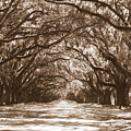 Savannah Sepia - Glorious Oaks by Carol Groenen