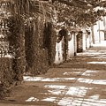 Savannah Sepia - Sunny Sidewalk by Carol Groenen