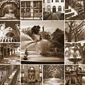Savannah Sepia Collage by Carol Groenen