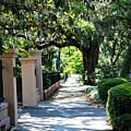 Savannah Sidewalk With Magnolia Tree by Carol Groenen