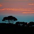Savannah Sunset by William Bartholomew