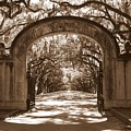 Savannaha Sepia - Wormsloe Plantation Gate by Carol Groenen