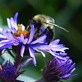 Save The Bees by Rosanne Licciardi