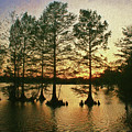 Savoring The Sunset Afterglow At Stumpy Lake, Va Beach by Ola Allen