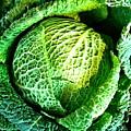 Savoy Cabbage by Caroline Reyes-Loughrey