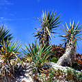 Saw Palmetto Canaveral National Seashore by Thomas R Fletcher