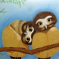 Saw-whet Owls by Luisa Zimerman