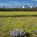 Sawtooths And Wildflowers by Idaho Scenic Images Linda Lantzy