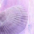 Scallop Sea Shell In Purple by Betty LaRue