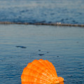 Scallop Seashell On The Beach by Anthony Totah