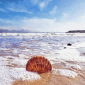 Scallop Shell On The Beach - Impressions by Susie Peek