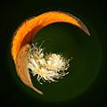 Scarce Copper 4 by Jouko Lehto