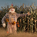Scarecrow In A Corn Field by Oleksiy Maksymenko