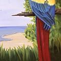 Scarlet Macaw by Susan Jump