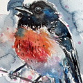 Scarlet Robin by Kovacs Anna Brigitta