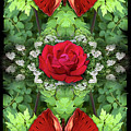 Scarlet Rose by Bruce Frank