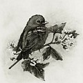 Scarlet Tanager - Black And White by Cindy Treger
