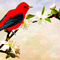 Scarlet Tanager by Laura D Young