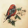 Scarlet Tanager - Vintage by Cindy Treger