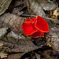Scarlet Underfoot by Jeff Phillippi