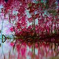Scarlet Water by Alan Look