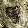 Love Endures by Shannon Turek