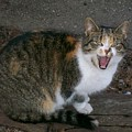 Scary Kitty by Sara  Raber