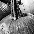 Scary Stem Pumpkin by Marsha McAlexander
