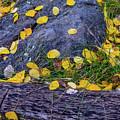 Scattered Aspen Leaves by Daniel Dean
