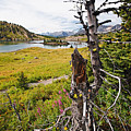 Scenic Alpine Lake And Meadow by George Oze