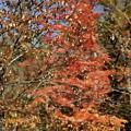 Scenic Autumn  by Jeelan Clark