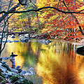 Scenic New Jersey Fall Fly Fishing  by George Oze