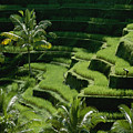 Scenic Valleys With Rice Fields In Bali by Paul Chesley