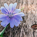 Scent  Florist by Tom Druin