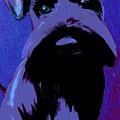 Schnauzer Puppy Poster by Karen Harding