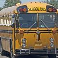 School Bus by Sara Stevenson