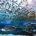 School Of Fish by Jill Lang