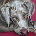 Scooby Weimaraner Pet Portrait by Portraits By NC