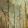 Scorched Forest by Darla Rae Norwood
