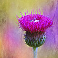 Scottish Thistle by Judi Bagwell
