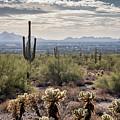 Scottsdale Arizona by David Hart