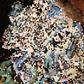 Scrap Yard Mosaic by Ned Walker