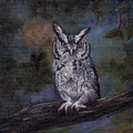 Screech Owl by Brenda Thour
