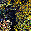Scripture - Matthew 7 Verse 14 by Glenn McCarthy Art and Photography