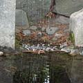 Sculpture Garden II by Suzanne Gaff