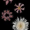 Sea Anemone by Heather Kirk