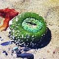 Sea Anemone by Julie Rauscher